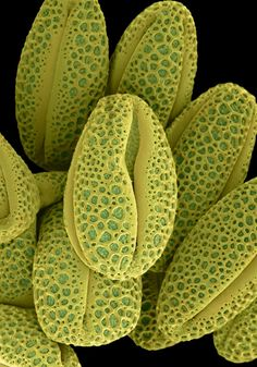 microscopic photos of flowers - Google Search