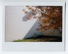 Fuji Instax Wide photo by Christopher Hutchinson