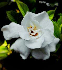 White like an angel #flower #home #solo #java #indonesia