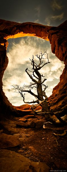Red rock with a tree