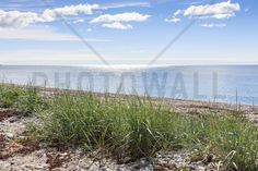 Gotland Beach - Fototapeten & Tapeten - Photowall