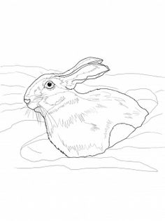 Snowshoe Hare in Snow Drift coloring page from Hares category. Select from 31983 printable crafts of cartoons, nature, animals, Bible and many more. Printable Crafts, Printables, Snowshoe Hare, Yellowstone Vacation, Free Printable Coloring Pages, Cartoon, Animals, Animales, Animaux