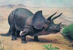 An old postcard of Triceratops.