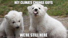 Polar Bears React to Climate Change