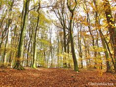 lady in black: Hiking in Luxembourg: Echternach #luxembourg #autumn #natureinfall #nature #forest #woods #fall #goldenleaves #placestogo #travelblogger #travel #hiking