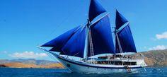 A Manta named Ombak Putih - Seatrek Sailing Adventures Bali Holidays, Sailing Adventures, Makassar, Rare Animals, Snorkelling, Komodo, Travel Design, Filipina, Sailing Ships