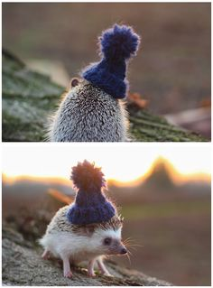 Cozy little hedgehog in a cute knitted hat.