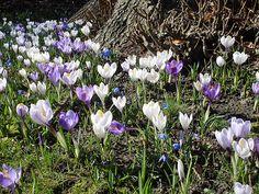 Fruehling-Blumen - Hintergrundbild