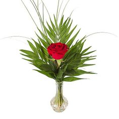 Flowers for Valentines Day on 14 February 2020 – choose from single red rose, dozen red roses, two dozen red roses or 100 roses with our Valentine's Day delivery. Cupid approved Valentines flowers available with FREE delivery. 100 Roses, Flowers For Valentines Day, Dozen Red Roses, Single Red Rose, Flowers Delivered, Cupid, Flower Arrangements, Vase, Plants