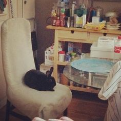 My bun has made it onto buzzfeed!    And this guest, who is definitely a dog waiting for dinner, and not at all a bunny or anything. 100% a dog. The most dog. Canine right here, for sure. | 15 Dogs Who Have Absolutely Impeccable Table Manners