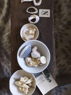 Seashells. Chris Court photography.
