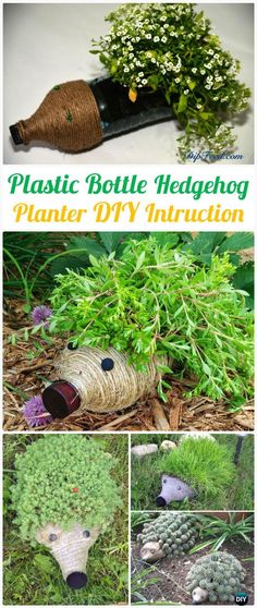 DIY Plastic Bottle Hedgehog Planter Instructions - DIY Plastic Bottle Garden Projects & Ideas DIY Plastic Bottle Garden Projects & Ideas: Collection of plastic bottle herbs, vegetables and flower gardening, water irrigation and Plastic Bottle Planter, Plastic Bottle Crafts, Plastic Bottles, Recycle Bottles, Container Gardening Vegetables, Succulents In Containers, Container Plants, Vegetable Gardening, Diy Garden Projects