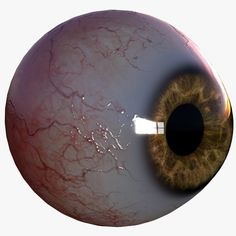 Realistic human eye Model available on Turbo Squid, the world's leading provider of digital models for visualization, films, television, and games. Human Anatomy 3d, Eye Anatomy, Body Anatomy, Male Skeleton, Modelos 3d, Human Eye, Ap Art, Female Bodies, Background Images
