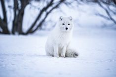shallow focus photo of long-coated white dog photo – Free Animal Image on Unsplash Police Dog Training, Dog Training School, Basic Dog Training, Puppy Training Tips, Animals Images, Cute Animals, Fox In Snow, Hot Dog Stand, Dog Steps