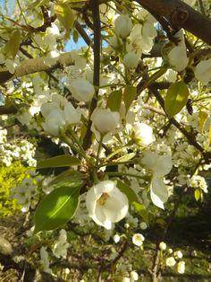 Foto: Daniella M. Fruit, Spring, Plants, The Fruit, Flora, Plant, Planting