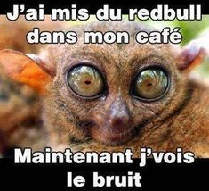 j'ai mis du redbull dans mon café Funny Cats, Funny Animals, Funny Jokes, Cute Animals, Minions, Image Fun, Pokemon, Laughing And Crying, Jokes Quotes