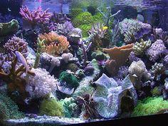 Brad Whitney's Reef Aquarium - Jan 2004 Reef Keeper Tank of the Month 2
