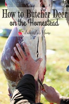 How to skin and butcher deer on the homestead... I already know how to but it wouldn't hurt to look into different ways.