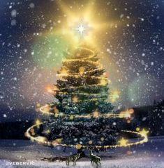 Christmas Tree Gif, Xmas Gif, Merry Christmas Pictures, Merry Christmas Wallpaper, Christmas Scenery, Merry Christmas Wishes, Christmas Mood, Christmas Music, Christmas Greetings