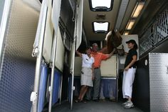 Really big horses fit in the Equine Motorcoach. Big Ben is 19.1 and 1800 pounds.
