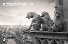 Les 6 meilleures publicités françaises de la semaine   LLLLITL