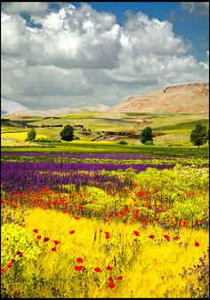 fields of flowers/Atlas, Morocco What A Wonderful World, Beautiful World, Beautiful Places, Beautiful Scenery, Belleza Natural, Nature Scenes, Belle Photo, Beautiful Landscapes, Wonders Of The World