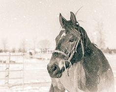 Horse Photography Winter Horse Art Digital Download by PhotoX1 Horse Photography, Winter Photography, Winter Horse, Horse Art, Horses, Digital, Animals, Animais, Animales