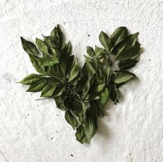 HEART #greenheart #greenery #greenleaves #leafdisplay Online Fashion Boutique, Green Leaves, Greenery, Bloom, Display, Clothes For Women, Heart, Shopping, Instagram