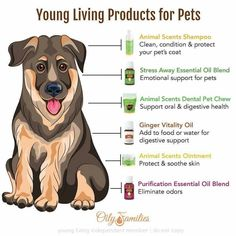 """Young Living is just essential oils. Here's a small list of products that pets can use: Animal Scents Shampoo, Stress Away Essential Oil Blend, Animal Scents Dental Pet Chews, Ginger Vitality Oil, Animal Scents Ointment, and Purification Essential Oil Blend. Please """"LIKE"""" me on Facebook: https://www.facebook.com/EOAdventureswithBecky ~~ Need to purchase oils? You can find out more information at https://www.youngliving.com/signup/?sponsorid=2385830&enrollerid=2385830 ~~"""