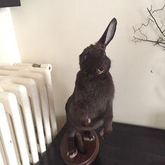 One Ear'd Bunny