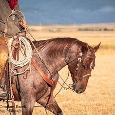 Meyer Company Ranch Horses in Montana •• Rise and Shine