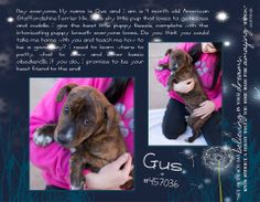 FEBRUARY 15-16TH-THIS WEEKEND $25 to adopt any dog or cat! You Can't Buy Love, but You Sure Can Adopt It! Gus is a 4 month old American Staffordshire Terrier Mix. McKinney, TX 75071 Email: animalshelter@co.collin.tx.us and ldrummonds@co.collin.tx.us (to inquire about an animal, email is the best if no response then call) Phone: 972-547-7292 https://www.facebook.com/photo.php?fbid=588070471273868&set=a.179059555508297.46697.111625568918363&type=1&theater