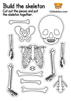 Skeletal System - Human Body Systems for Kids Free Printables - Homeschooling. Skeletal System Activities, Human Body Activities, Free Activities For Kids, Skeletal System Worksheet, Space Activities, Learn Biology, Body Preschool, Body Bones, Human Body Anatomy
