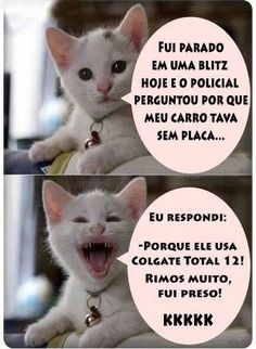 New funny humor memes sisters ideas Cat Memes, Dankest Memes, Jokes, Gato Do Face, Video Humour, Good Humor, Funny Humor, Try Not To Laugh, Funny Moments