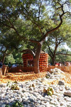 Dallas Arboretum 2010 fall