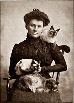 vintage cats photographs - Google Search
