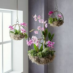 How to Make a Hanging Orchid Planter Orchid Flower Arrangements, Orchid Planters, Orchid Centerpieces, Orchid Pot, Orchids Garden, Hanging Orchid, Hanging Flower Pots, Hanging Rope, Plant In Glass