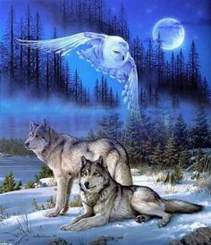Wolf spirit – Vudu – Rent, Buy or Watch Movies with No Fee! Native American Wolf, Native American Artwork, Wolf Spirit Animal, Animal Spirit Guides, Wolf Photos, Wolf Pictures, Beautiful Wolves, Animals Beautiful, Tier Wolf