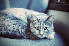 muffin the cat.