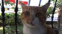 Rusty Cat
