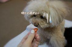 葵~えぁれん...associated snowmom ❤︎えぁれんちゃん http://ameblo.jp/7-noa/entry-12041723945.html