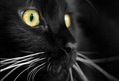 National Black Cat Day …. October 30!!   It Is What It Is