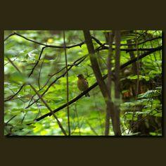 harmony in nature