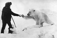 Unbelievable photo of an explorer feeding treats to a polar bear and her cubs! A mother with her cubs are known to be the most ferocious of all animals. Just another moment the world shows us to remind us we really don't know anything