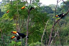 Cataratas de Iguazu .Misiones