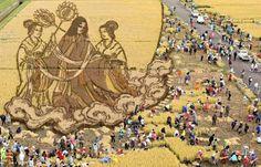 Rice paddy art in Aomori Japan.