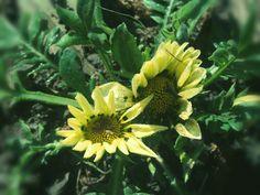 Flor no Parque Municipal de Petrópolis