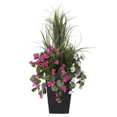 Petit areca en pot orange int ext pots and orange for Plante fushia exterieur