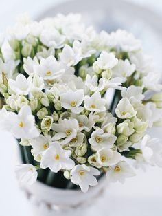 fresh flowers make my day