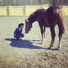#bighorse#horse #foal #love#equine